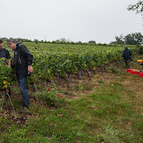2013 vendanges du chardonnay - 2013%2B09%2B28%2BGuimbelot%2Bvendanges%2Bdu%2BChardonnay%2B155.jpg