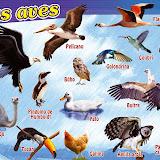 P-305 Las aves.jpg