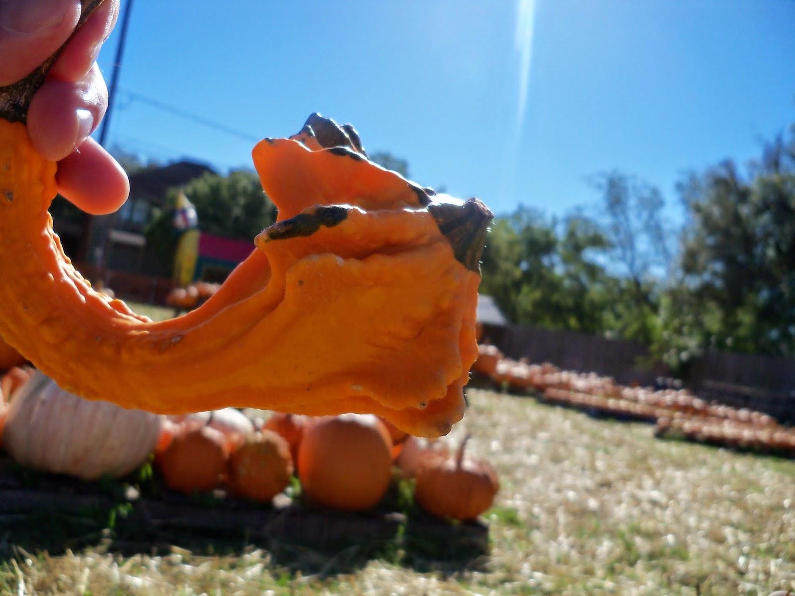 Pumpkin Patch 2014 - 116_4416.JPG