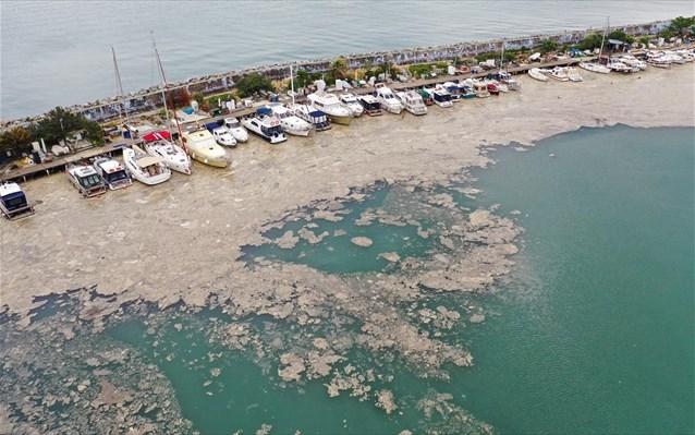 Από τον Μαρμαρά έφτασε η θαλάσσια βλέννα στη Λήμνο - Τι είναι- Κίνδυνος για το Θρακικό πέλαγος