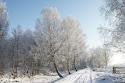 04 winter in de peel.jpg
