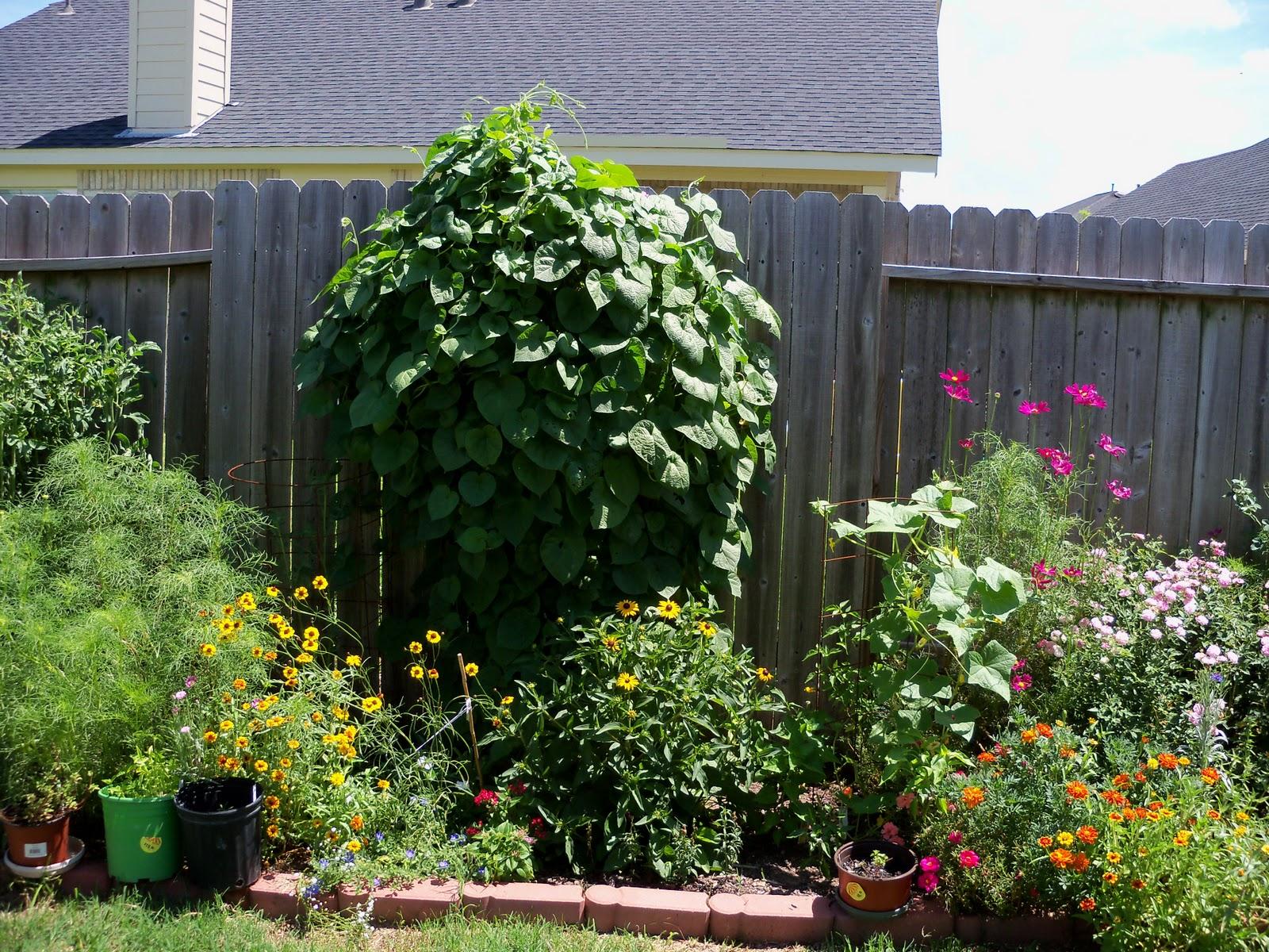 Gardening 2010, Part Three - 101_4411.JPG