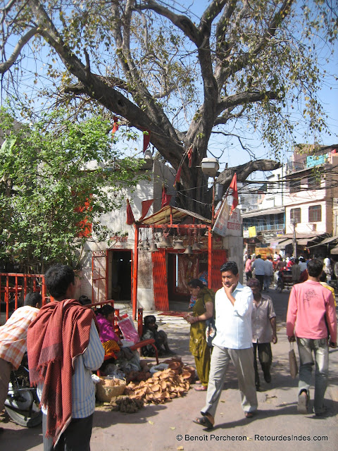 Temple au pied d'un arbre, Delhi