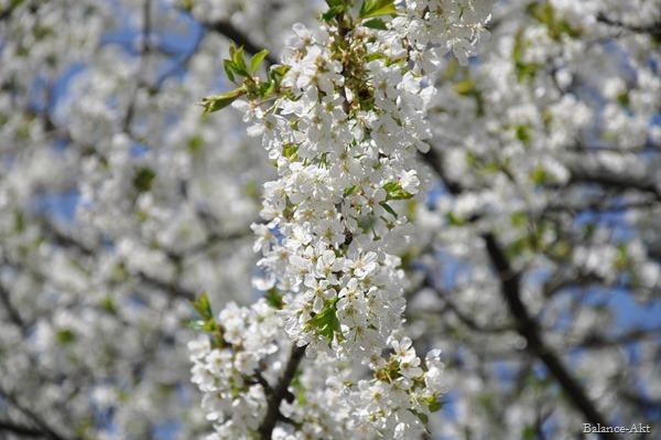 Frühlingsfreuden_1