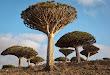 Don-Whitebread-2010_238_Socotra