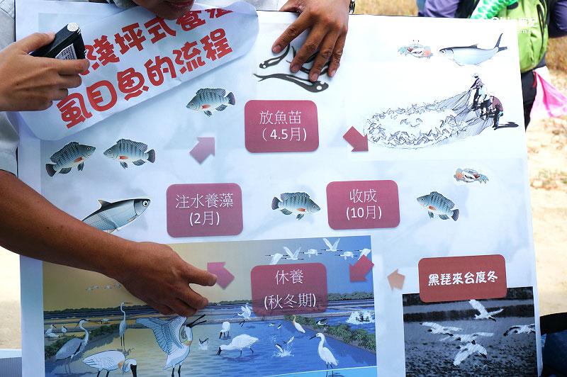 台江國家公園-虱目魚漁塭3