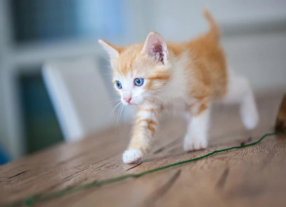5 Things to Consider as your Cat Ages