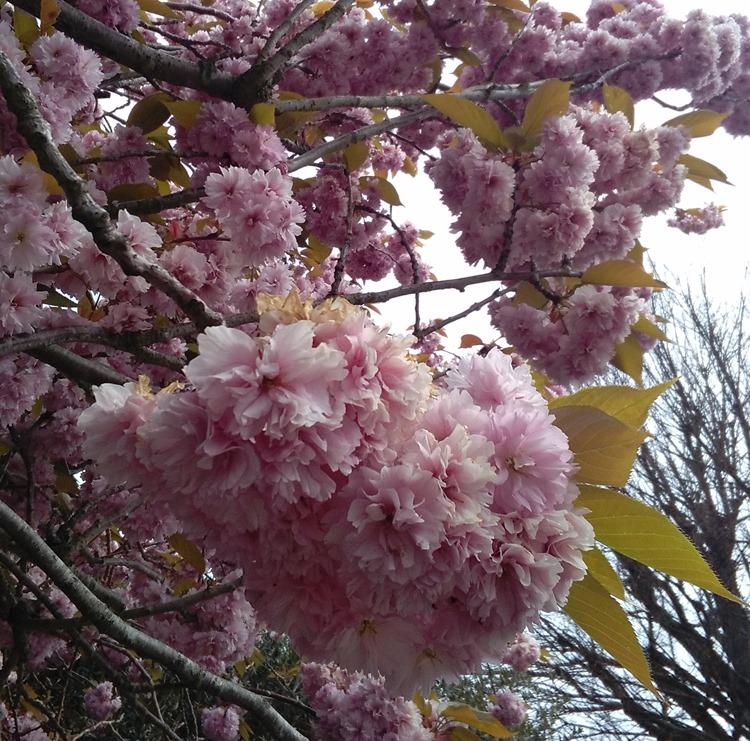 pinl blossom bundles