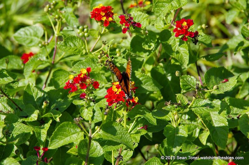 10-26-14 Dallas Arboretum - _IGP4329.JPG