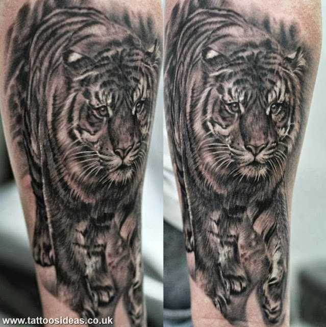 Lion Tiger Tattoos Meanings and Pictures - Tattoos Ideas