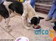 2da asistencia a Pisco por terremoto 2007 (10)