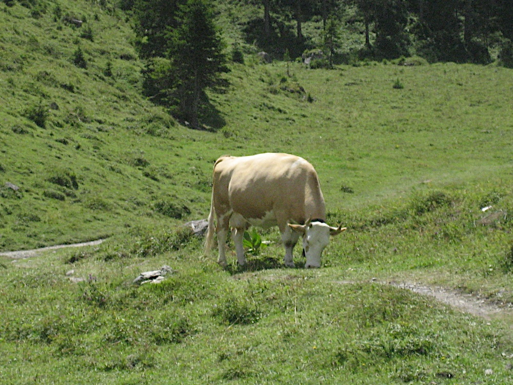 Campaments a Suïssa (Kandersteg) 2009 - IMG_3655.JPG