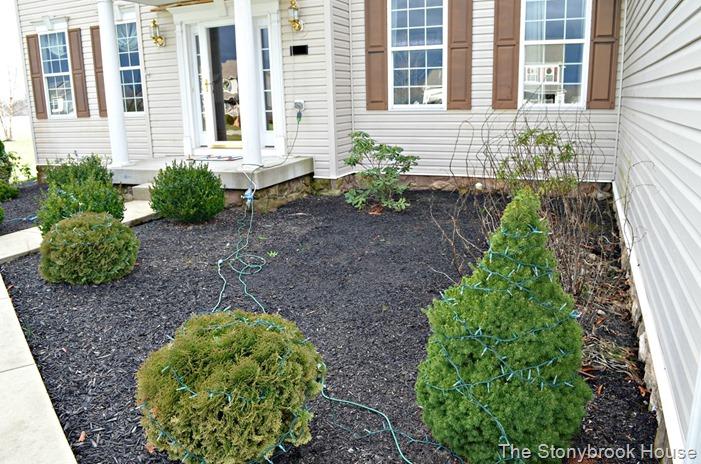 Garden Needs Help