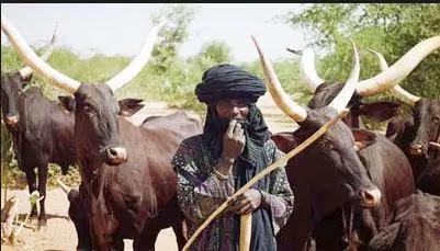 [Nishadi]Labarin wani Fulani Acikin Babbar Mota(Trailer)