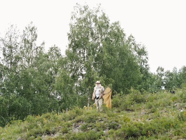 Aux environs de Nizhnekayancha : biotope de Parnassius apollo alpherakyi. 2 juillet 2010. Photo : J. Marquet