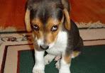 sad-puppy.jpg