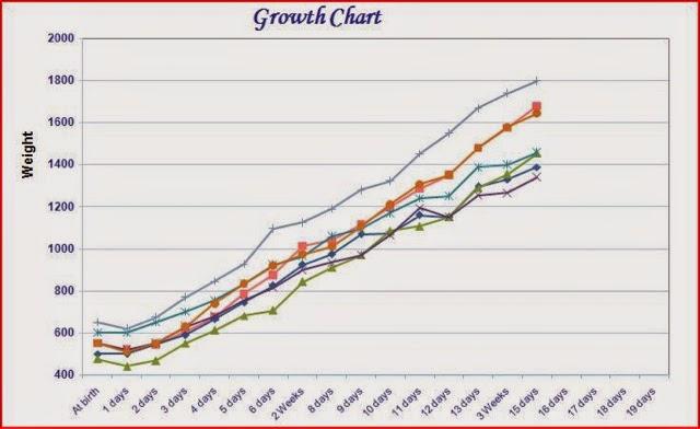 K9 Cardi Blog Puppy Growth Chart