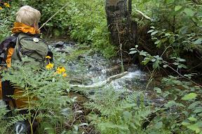 Dapping a fly on a stream draining Escudilla.