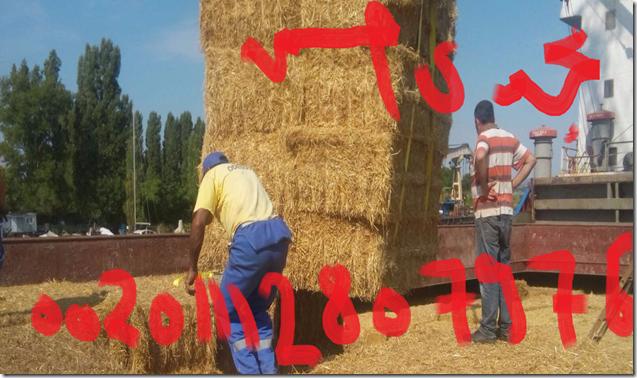قش القمح البلغاري