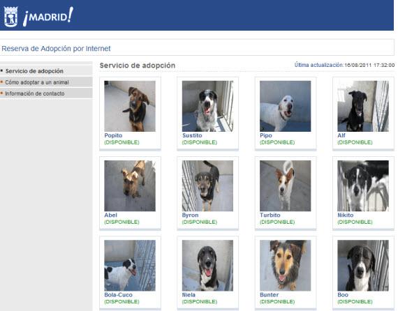 Adopta por internet una mascota del Centro de Protección Animal (CPA)