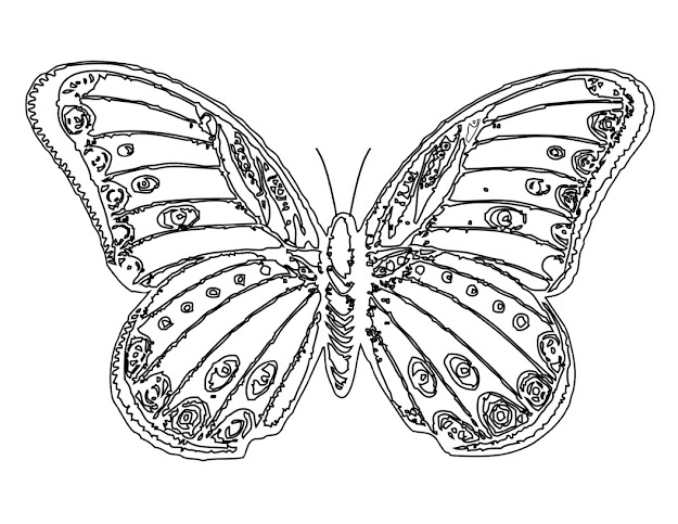 Butterfly And Flower Coloring Pages For Adults  Free Printable Butterfly  Coloring Pages For Kids