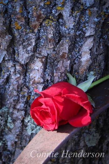 Nov 10 Funeral Rose