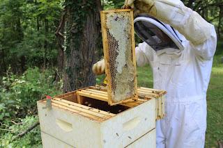 PLC Honey Fiesta 7/10/16 - IMG_3583.JPG