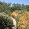 laguna-coast-wilderness-el-moro-019.jpg