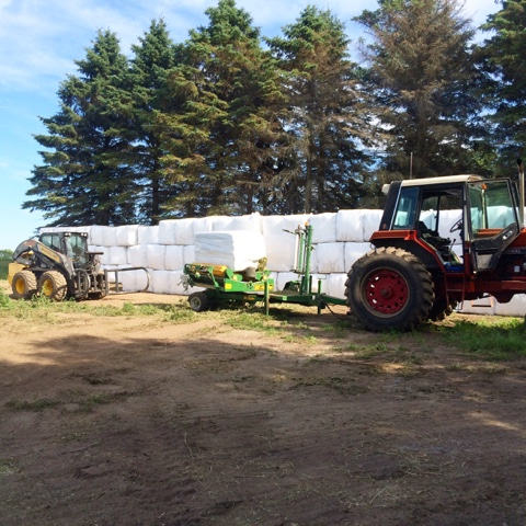 wrapping clover bales