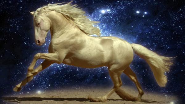 Albino Horse, Magic Animals 2