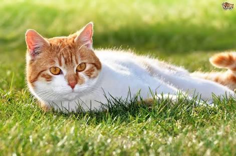 Hukum Memelihara Kucing di Rumah
