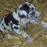 Gretta & Cobalt Blues 3/24/12 litter - SAM_3365.JPG