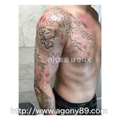 刺青、タトゥー、刺青デザイン、タトゥーデザイン、tattoo、tattoo画像、刺青画像、タトゥー画像、刺青デザイン画像、タトゥーデザイン画像、刺青 虎、刺青 白虎、虎、和彫り、額彫り、ひかえ七分袖額彫り、曙暈し、刺青 筋彫り、白虎、桜、桜木、光、雲、とっくり、おちょこ、七分袖額彫り、 刺青男性、タトゥー男性、メンズタトゥー、千葉 刺青、千葉 タトゥー、千葉県 刺青、千葉県 タトゥー、柏 刺青、柏 タトゥー、松戸 刺青、松戸 タトゥー、五香 刺青、五香 タトゥー、タトゥースタジオ 千葉、タトゥースタジオ 千葉県、tattoo studio、タトゥースタジオ、 アゴニー アンド エクスタシー、初代彫迫、ほりはく、彫迫ブログ、ほりはく日記、刺青 彫迫、彫師、刺青師、http://horihaku.blogspot.com