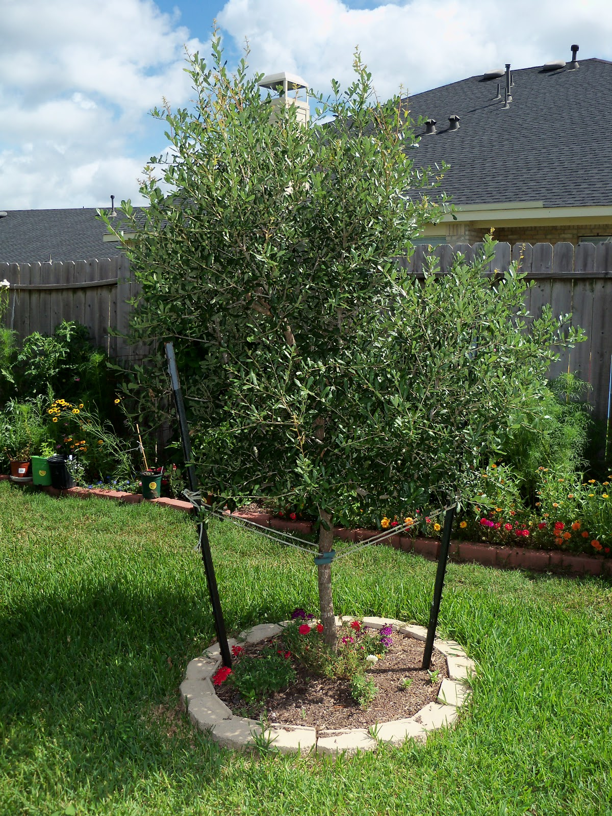 Gardening 2010, Part Three - 101_3834.JPG