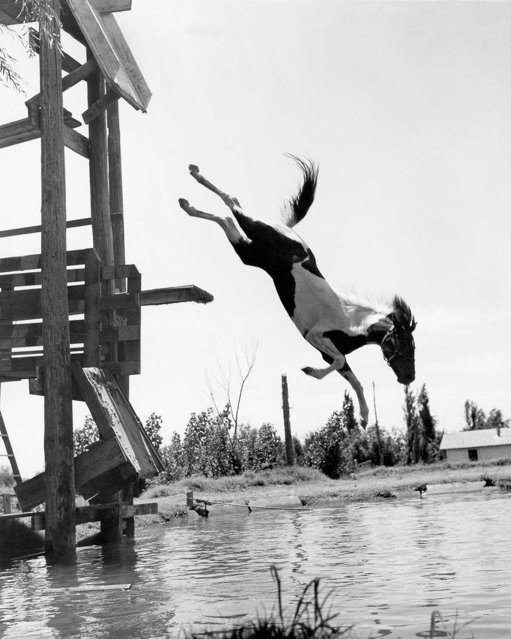 diving-horses-4