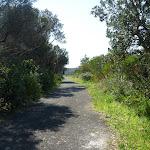 Trail near Henry Head (309581)