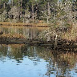 Fowl Marsh from Boat Feb3 2013 024