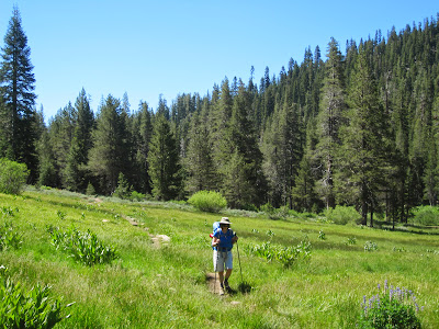 m enjoying a hike through a meadow on Disaster Creek. ©http://backpackthesierra.com