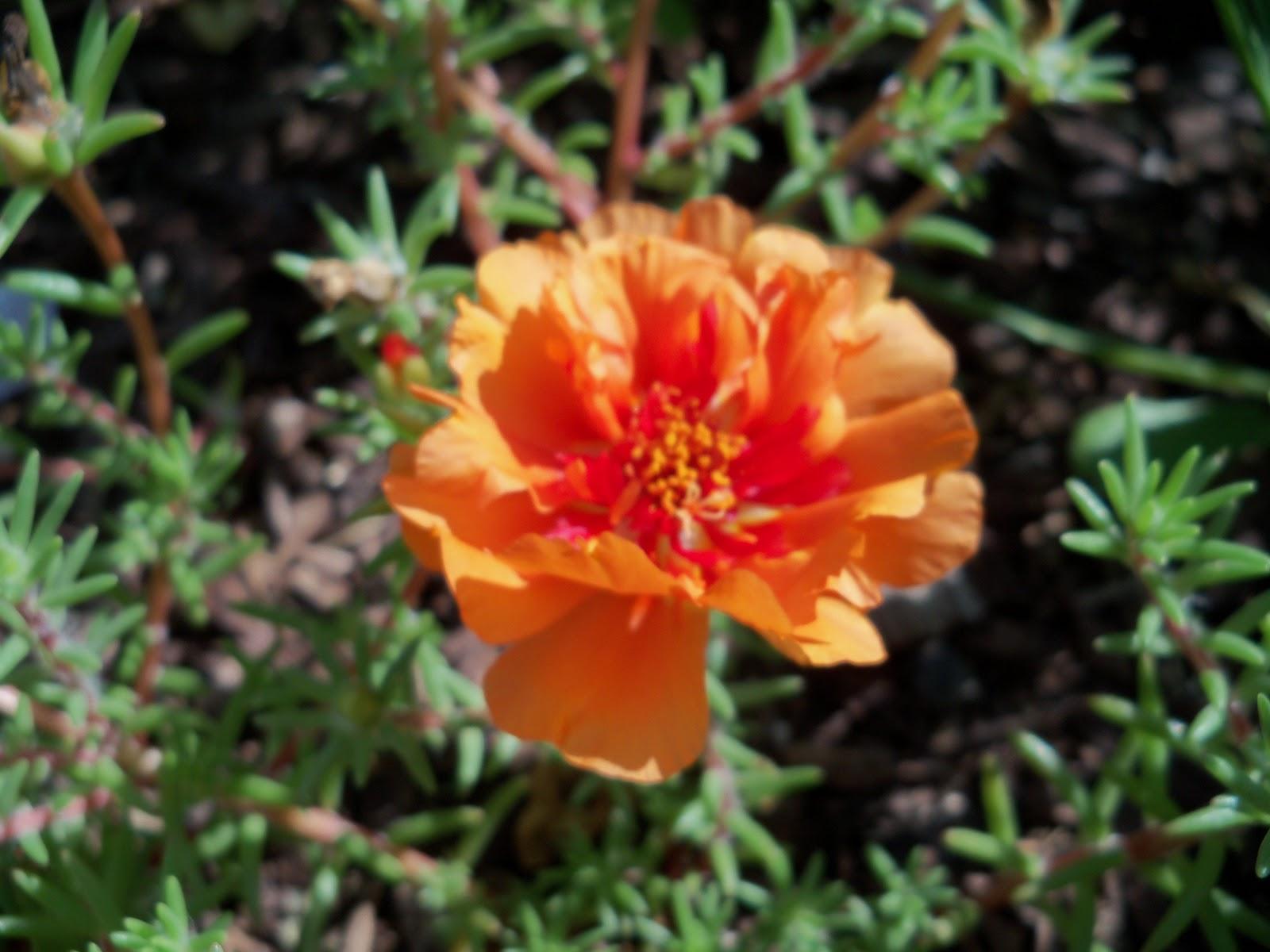 Gardening 2010, Part Two - 101_2589.JPG