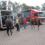 paarden4daagse Zorgvliet 2012 028.jpg