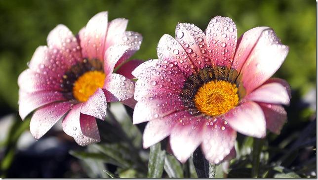 margaritas flores (58)