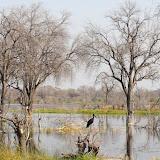 Botswana - DSC00535.JPG