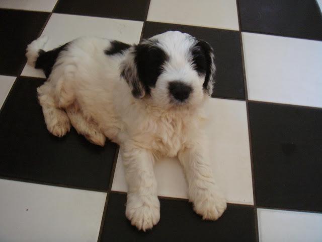 Pups Anne 2011 (3)