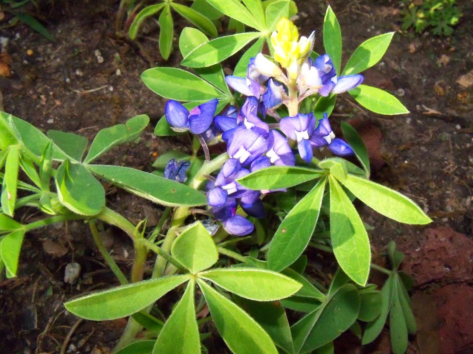 Gardening 2015 - 116_7678.JPG