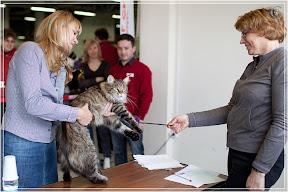 cats-show-24-03-2012-fife-spb-www.coonplanet.ru-109.jpg
