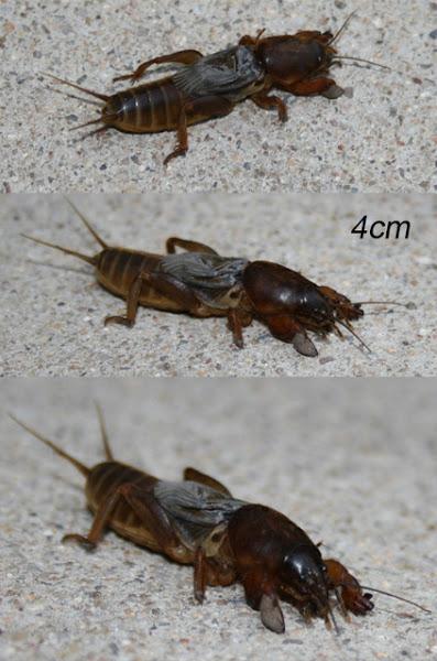 scary bug