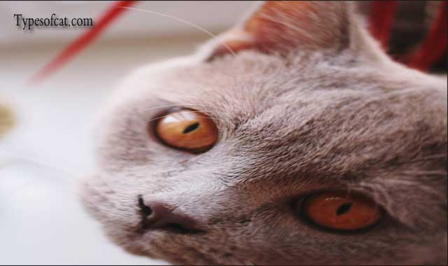 Cat eye problems and symptoms