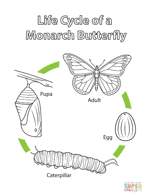 Click The Life Cycle Of Monarch Butterfly Coloring Pages