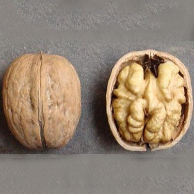 Казаку грецкий орех