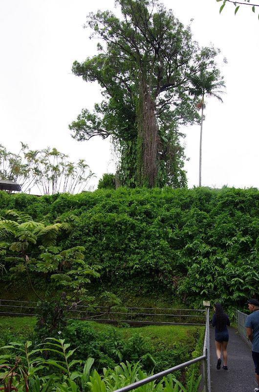 06-23-13 Big Island Waterfalls, Travel to Kauai - IMGP8881.JPG